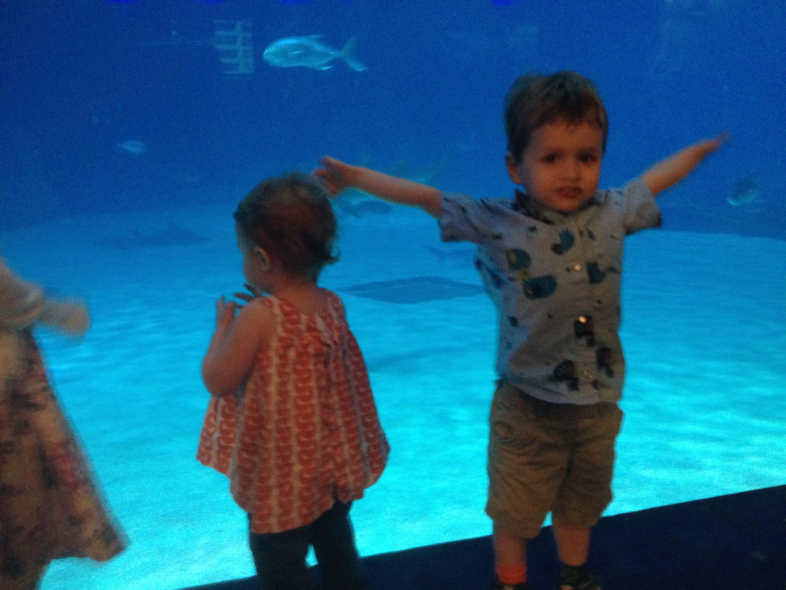 Georgia Aquarium Military Discount
