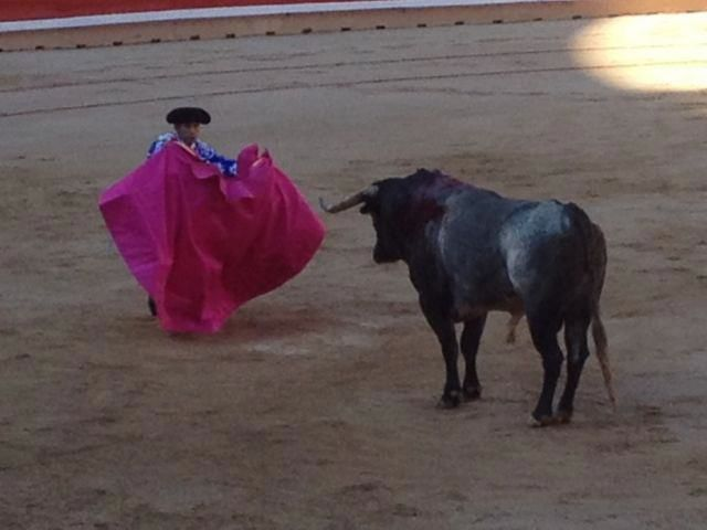 bull fight 2