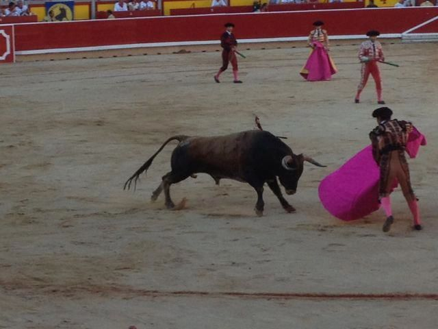 bull fight 3