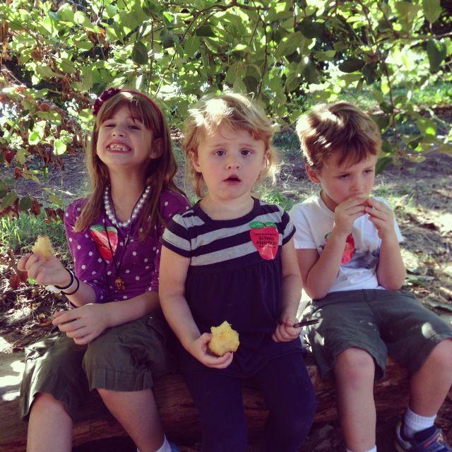 3 babies eating