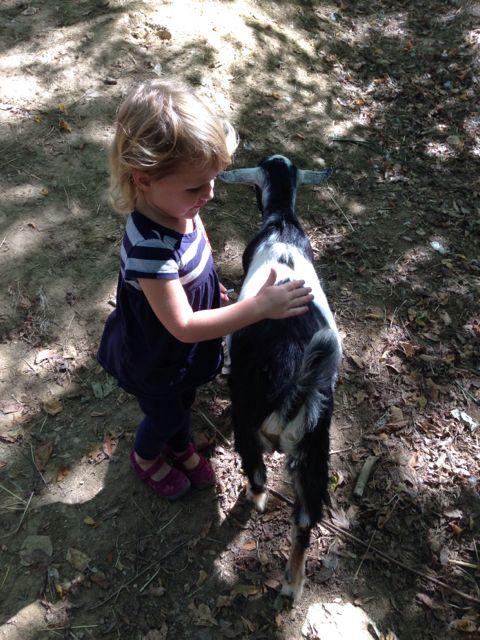 L petting goat